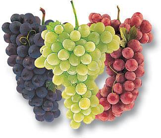groždje kalorije