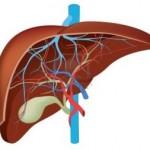 Kako sačuvati oporaviti jetru