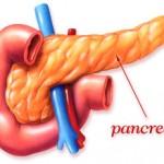pankreas gusteraca