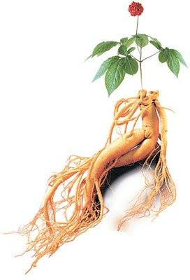 Ginseng (žen-šen) afrodizijak-lekovita svojstva