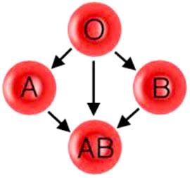kako se odredjuje krvna grupa