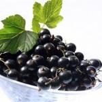 Ribizle kalorije vitamini nutritivna vrednost lekovitost