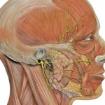 paraliza zivaca lica