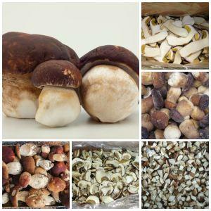 Gljive bolje od mesa – Vrganj, smrčak, jablanovača, rudnjača, škripavac…