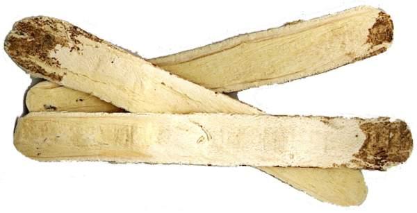 astragalus biljka