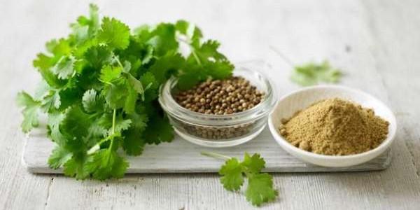 Biljka korijander ! kao začin – čaj – upotreba za mršavljenje – uzgoj!