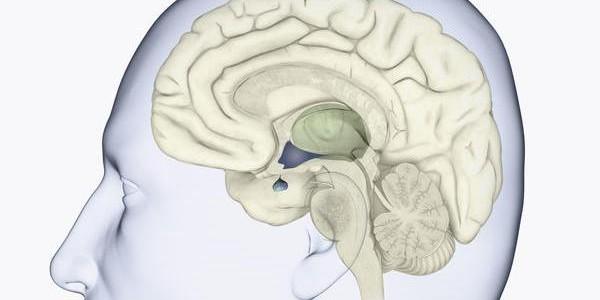 Hipopituitarizam simptomi, uzroci, lečenje, praćenje