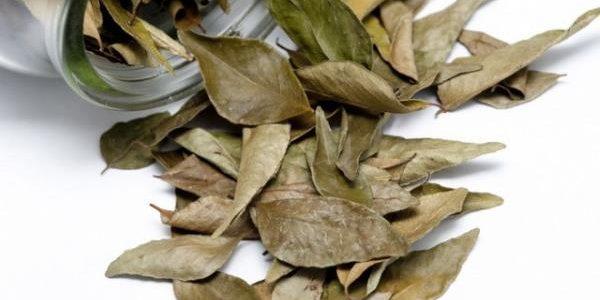 Terapija ruskog naučnika Genadija Malakova: Ova čudesna biljka sprečava rak, ali šta se događa kada je zapalite