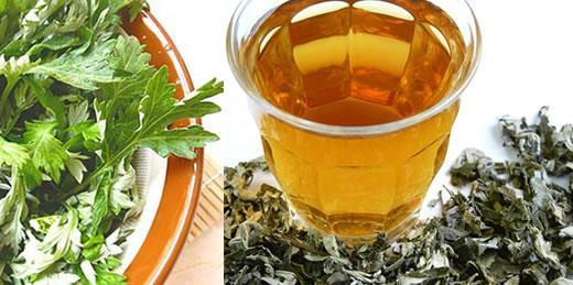 Tinktura i čaj od pelina priprema i upotreba za želudac i druge zdravstvene tegobe
