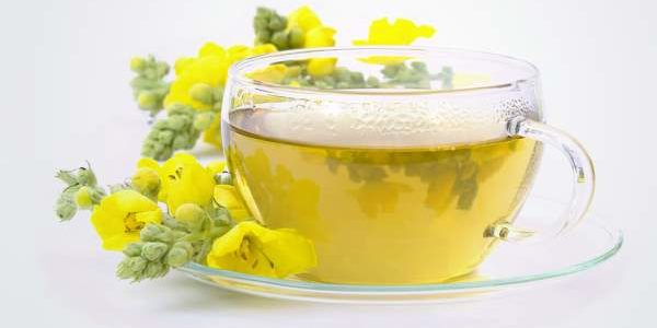 Čaj od divizme – priprema, upotreba, lekovita svojstava