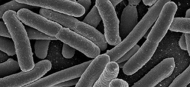 Heliko bakterija simptomi i lečenje prirodnim putem